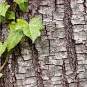 Texture or background of tree bark Stock Photos