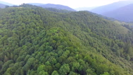 Mountains covered with green forest. aerial footage Stock Footage