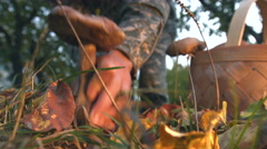 Mushrooming in the forest. Stock Footage