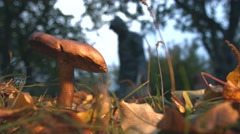 Mushrooming in the forest. Slow motion. Stock Footage