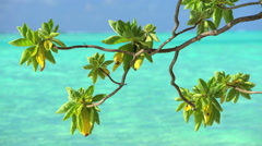 Tree branches swaying by aquamarine sea in the tropical Island Paradise waters Stock Footage