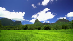 View of the Tahitian Windward mountain Range agriculture and green vegetation in Stock Footage