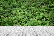 Wood terrace and Plant texture Stock Photos