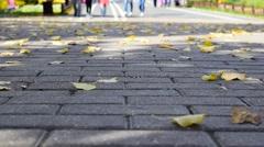 Autumn Leaves On Cobblestones Stock Footage