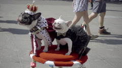 Dogs dressed as kings - royal puppies in royalty costumes in street, funny, NYC Stock Footage