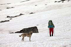 Dog and hiker in snow mountains at gray spring day. Kuvituskuvat
