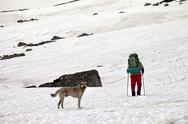 Dog and hiker in snow mountains at gray spring day. Stock Photos