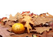 Small decorative pumpkin on autumn dry leaves from oak Stock Photos