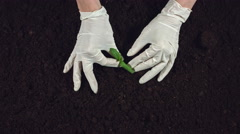 4k Gardening Composition of Hands in Gloves planting a Tree Stock Footage