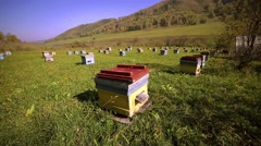 Apiary, bee, much hives Stock Footage