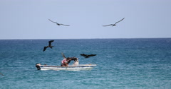 Two Fishermen fish from a boat on Noronha Beach, Brazil. Birds passing Stock Footage