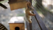 Squirrel sits on a cage Stock Footage