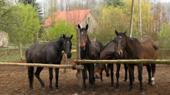 Five bay horses Stock Footage