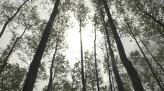 4k Time Lapse Low Angle Trees in Forest Wind Cloudy Sunlight Lens Flare Stock Footage