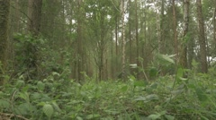 4k Woodland Trees Nettles Grass Forest Stock Footage