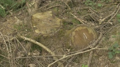 4K Stumps of Felled Trees In Woodland Countryside Stock Footage