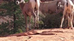 Zion National Park , Sept 2016, colorful landscape Stock Footage