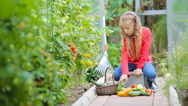 Adorable little girl gathering crop of cucumbers, pepers and tomatoes in Stock Footage