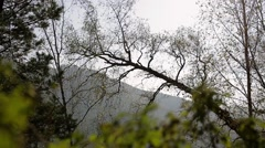 Autumn forest. Mountains. tree trunk Stock Footage