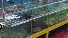 4K Alive Frogs For Sale and Cooking At The Night Market of the Street Tamsui-Dan Stock Footage