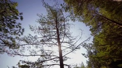Tree in autumn, Wide Angle Stock Footage