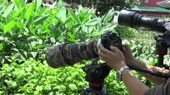 4k Asian Photographer takes pictures of wildlife with DSLR camera-Dan Stock Footage