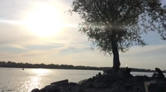 Tree by the river at sunset Stock Footage