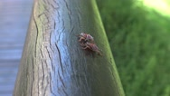 4K a Tessaratoma papillosa walking over the wood in the park of Taipei city-Dan Stock Footage