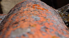 Lichen Macro Wavy Tile Roof Stock Footage