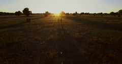 Aerial wiew love young couple walking on the field with hay and horses at sunset Stock Footage
