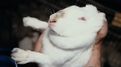 Take rabbit in hands Stock Footage
