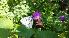Butterfly on the flower Stock Footage