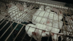 Rabbits in cages on the farm Stock Footage