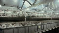 Livestock business. breeding rabbits Stock Footage
