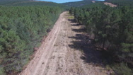 Fliying over firebreak with pine tree forest Stock Footage