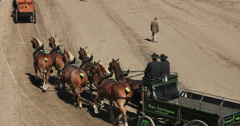Beautiful Draft horses and wagons enter judge DCI 4K Stock Footage