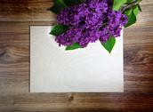 Beautiful lilac flowers on wooden background Stock Photos