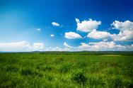 Beautiful summer landscape wild meadows Stock Photos