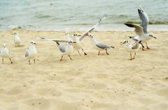 Seagulls are fighting for a piece of bread on the coast. Stock Photos