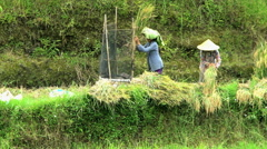 Java, Indonesia - August 2016: Slow motion of women farm worker in conical hat Stock Footage