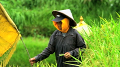 Java, Indonesia - August 2016: Traditional Scarecrow with Asian male working on Stock Footage