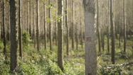 Forestry paint marking on tree trunks in woods Stock Footage