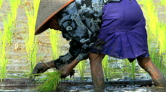 Java, Indonesia - August 2016: Asian female farmer planting crop in fertile soil Stock Footage