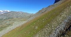 Sheep grazing - Hight Mountain Stock Footage