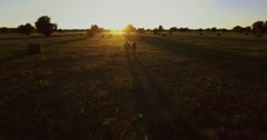 Slow motion love young couple walking on the field with hay and horses at sunset Stock Footage