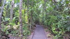 POV walking on jungle boardwalk through lush tropical vegetation of Daintree Stock Footage