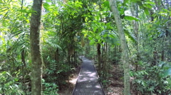 POV Walking on woodland boardwalk with sun flare through trees in Daintree Stock Footage