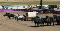 Draft Horse and historic wagon demonstration DCI 4K Stock Footage