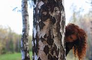 Pretty smiling woman looks out of big birch in autumn forest, shallow dof Stock Photos