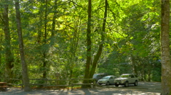 4K Pacific Northwest Coast Forest, Green Foliage Forest Canopy, Maple Trees Stock Footage